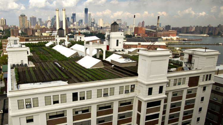 Brooklyn Grange rooftop farm, Brooklyn Navy Yard. Image: Brooklyn Grange.