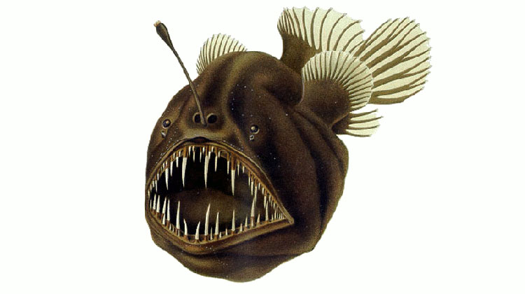 """Humpback anglerfish"". Licensed under Public domain via Wikimedia Commons - https://commons.wikimedia.org/wiki/File:Humpback_anglerfish.png#mediaviewer/File:Humpback_anglerfish.png"
